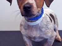 ADOPTED!!! Henry's story Henry, and his sibling, are