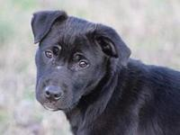 My story Adora is a lab mix puppy about 15 wks old as
