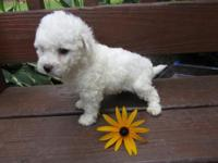 We have one good-looking Bichon puppy wanting a great