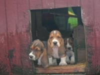 These pups will be ready to go June 30. They will be