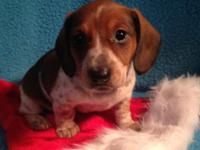 I have 3 lovely dachshund young puppies trying to find