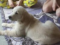I HAVE 2 MALES AND 1 FEMALE AVAILABLE from a litter of