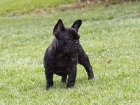 We have a 5 month old adorable French Bulldog girl