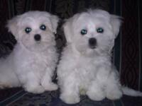 Two handsome male pups looking for loving homes! Born,