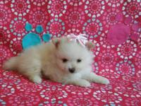 I have 3 adorable AKC Pomeranians that were born on