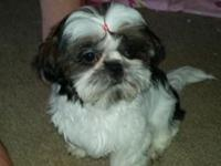 I have 3 boys and 3 girls there AKC shih tzus. You get
