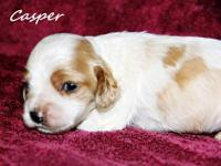 We have a beautiful litter of sweet babies for sale.