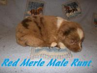I have one female and four males available clutter of