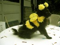 IM READY FOR TRICK OR TREAT ! I AM THE BUMBLE BEE POM