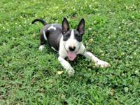 Really high energy, enjoys to play and run, 15 week old