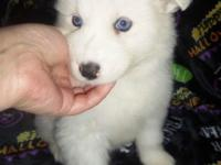 We have one Adorable Fluffy female Puppy available (Mom
