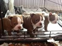 All currently have deposits for!!! Adorable litter of 5