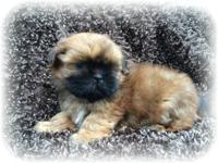I have 2 charming female shih Tzu young puppies that