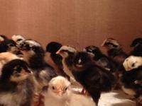 I have 25 cute chicks for sale. They are a mix of