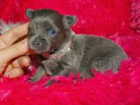 Puppies Born October 31st, will be available mid Jan to