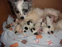 6 new born adorable puppies ! will be ready just in
