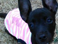 A darling little girl, she is so cuddly, affectionate &