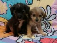 I have Male & Female puppies available, they have had