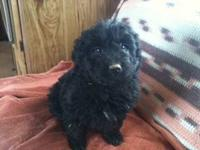 WE HAVE ONE ADORABLE BLACK MALE LEFT!He is ready to go