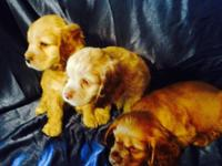 3 blonde males ($500.00) 2 blonde females & 1 black and