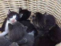 Sweet, adorable country kittens for adoption. Have been