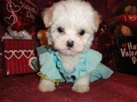 I have 3 female maltipoo puppies that are ready to go