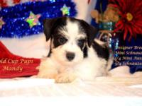 Adorable Designer Breed Mini Schnauzzie Puppies For