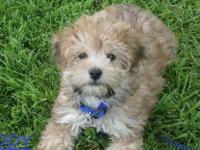 COME MEET OUR LITTLE FLUFF BALL BRODY, HE IS CURRENT ON