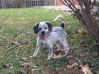 Dixie Adorable Poodle Mix Puppy (10 weeks old) for