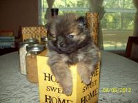 CHECKOUT NEW PICS......I WILL HAVE TWO LITTERS OF