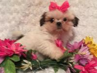 Meet Piper she is an adorable little purebred Red and