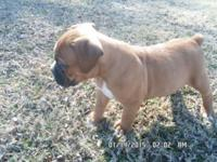 FULL and adorable OF PERSONALITY. HANK IS A REGISTERED