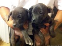 Hello everybody! We have 2 puppies ready for adopting!