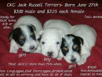 Boy is on HOLD. Girls are $325 each- $50.00