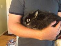 Very friendly jersey wooly bunny, named Harvey. He is a