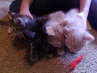 4 totally free kittens-mixed type. 2 males and 2
