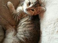 We have 3 cute female kittycats that were deserted at