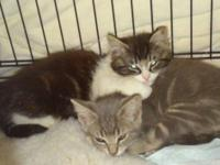 I have three kittens that are ready to find their