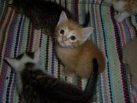 Six darling kittens! The solid orange is a Male. The
