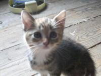 Adorable kittens looking for a forever home. There is a