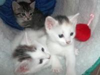 These kittens are very smart healthy and cute as can