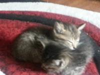 Free kittens to good home (approx. 10 weeks old).