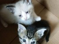 I have 2 adorable kitten's that need a forever home.