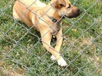 Zoey is an 11 month old, overly affectionate lab mix,