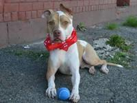 Scooby is found at Brooklyn Animal Care and Control. I