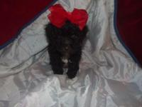 shes very sweet 8 weeks old shes had all her shots and