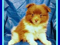 I have 2 adorable male pomeranian puppies available for