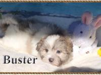 Buster is a delightful, spirited little pup. The