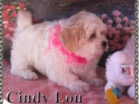 CindyLou is a precious little lady adorable as a