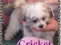 Cricket is a beautiful little sweetheart. She is